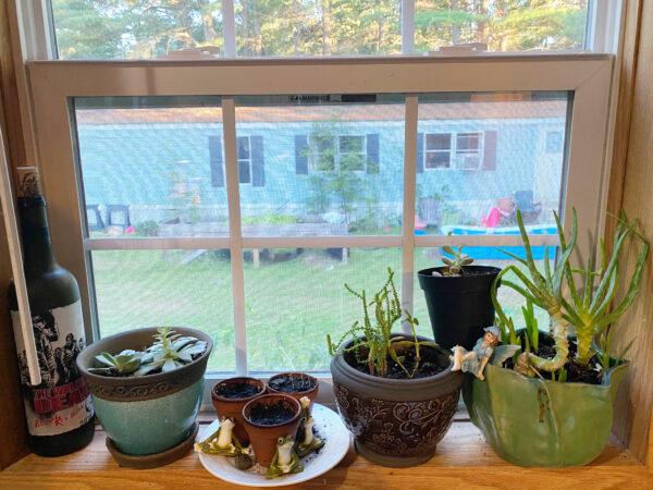 gardening hobby 1